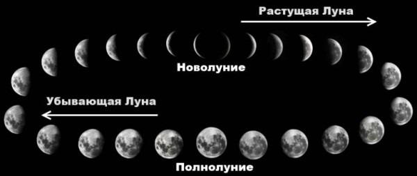 фазы луны и лунный календарь садовода и огородника на февраль 2019 года