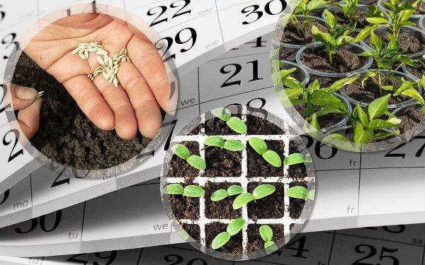 лунный календарь посадок в марте 2019 года