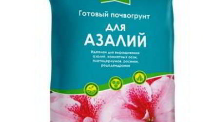 Грунт для азалий: где купить, состав, приготовление почвы своими руками