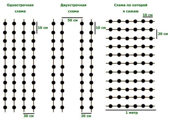 схема посадки лука весной в открытый грунт