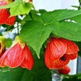 комнатные цветущие растения фото с названиями