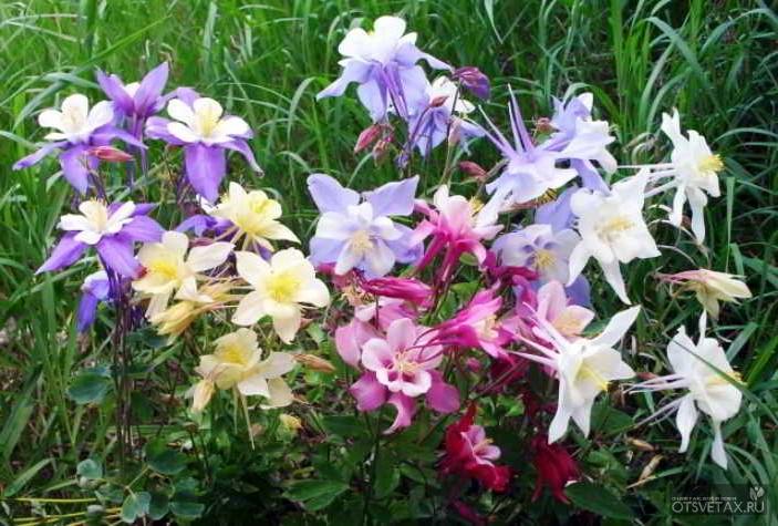 какие цветы посадить осенью чтобы зацвели весной
