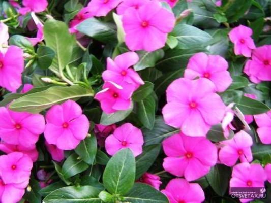 какие цветы сажают осенью в саду