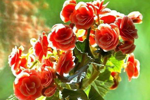 цветущие домашние растения фото и названия