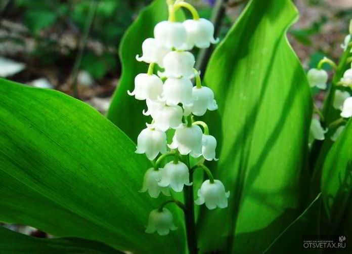 какие цветы сажают осенью на даче для цветения весной и летом бесплатно онлайн