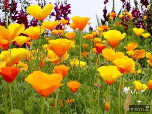 какие цветы сажают осенью на даче фото и название