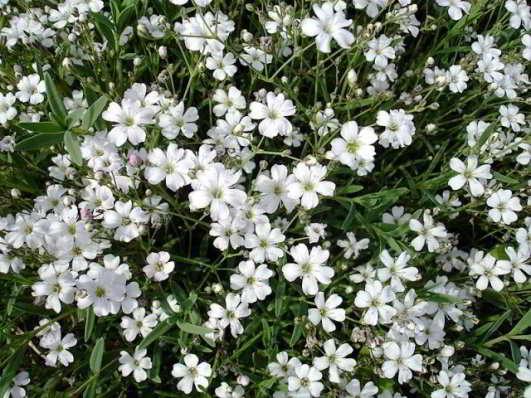цветы для сада неприхотливые долгоцветущие с фото