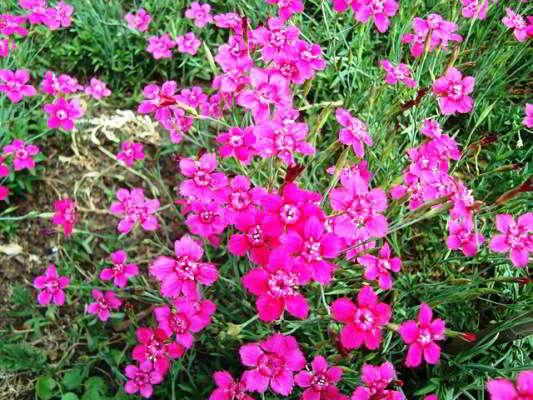 какие цветы сажать в марте на рассаду фото и название