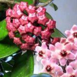 комнатные цветы цветущие фото названия