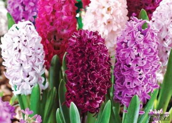 какие цветы сажают осенью на даче для цветения весной и летом если дуют ветры