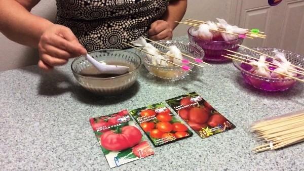 обеззаразить семена помидор