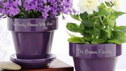 Как оживить комнатные цветы в горшках