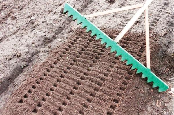 посадка чеснока осенью когда и как посадить
