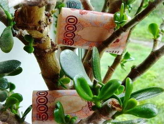как посадить денежное дерево и привлечь деньги