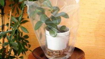 Как уберечь комнатные цветы и растения от высыхания в ваше отсутствие