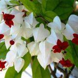 цветы комнатные цветущие фото и названия разных пород