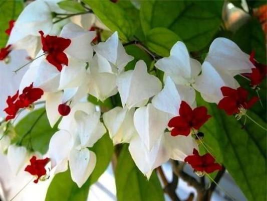 цветущие зимой комнатные растения фото и названия
