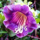 цветы комнатные цветущие фото и названия и уход