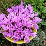 домашние цветы фото с названиями цветущие