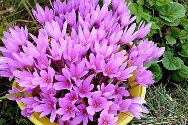 комнатные цветущие цветы фото и названия и уход за ними