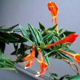 цветы комнатные цветущие фото с названиями по алфавиту