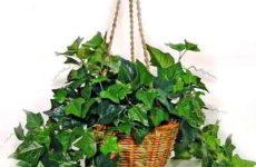 Знакомьтесь! Эти комнатные растения очищают воздух в доме