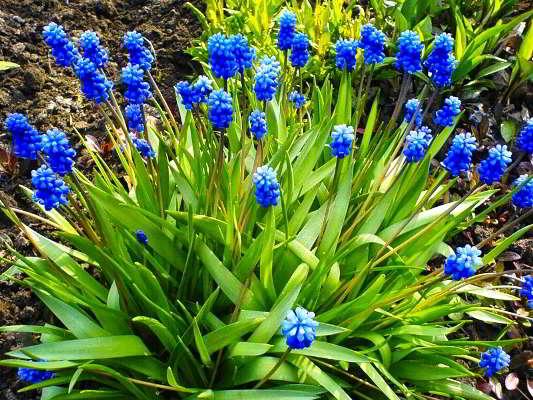 первоцвет название цветов