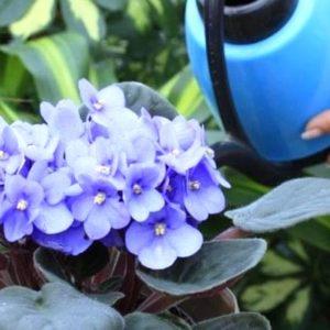 Новички в цветоводстве: с чего начать?