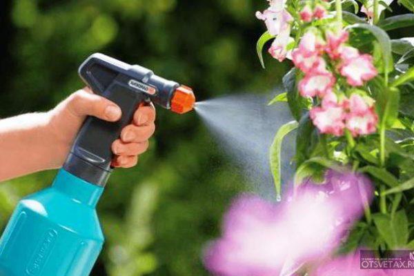 янтарная кислота для комнатных растений отзывы