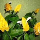 красивые домашние цветы с названиями и фото