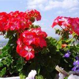 комнатные цветы фото и названия цветущие