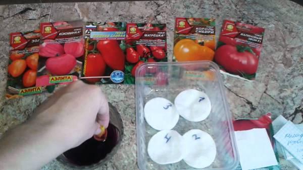 подготовка семян томатов к посеву на рассаду в домашних условиях