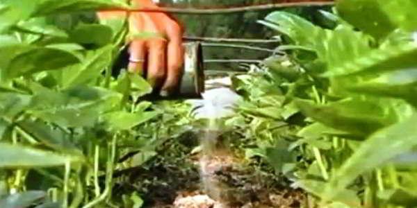 желтеют листья у огурцов что делать народные методы
