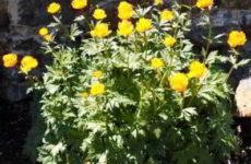 Посади цветы на клумбе — забавная онлайн-игра