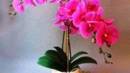 Правила ухода за орхидеей в домашних условиях фото