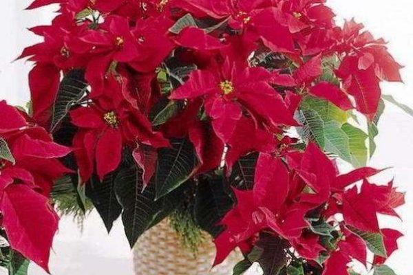 цветущие комнатные растения фото названия
