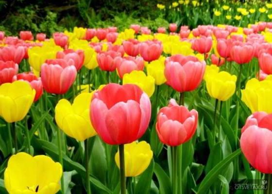 какие цветы сажают осенью на даче для цветения весной и летом какой лучше