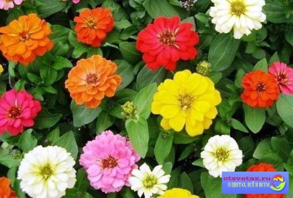 Цветы в клумбе названия и фото