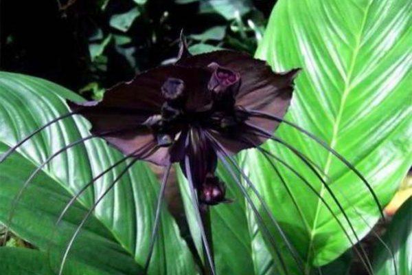 цветущие комнатные растения фото и названия типа дерева