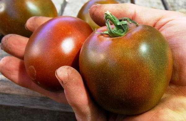 помидоры для теплицы из поликарбоната сорта лучшие видео