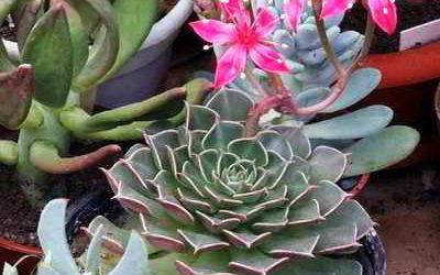 Уход за растениями в период покоя