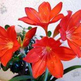 комнатные цветущие цветы в горшках фото