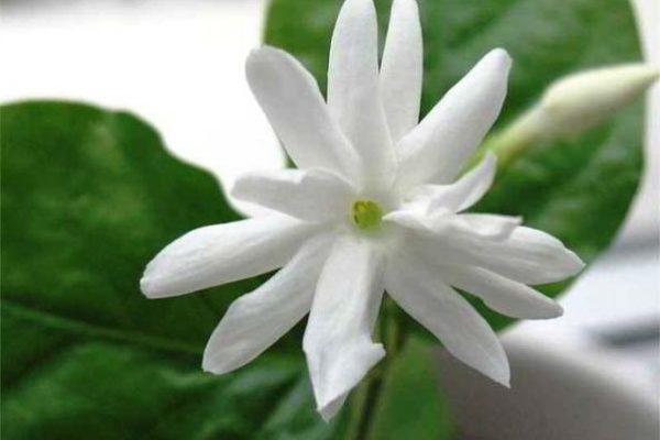 цветущие комнатные цветы фото и названия все виды