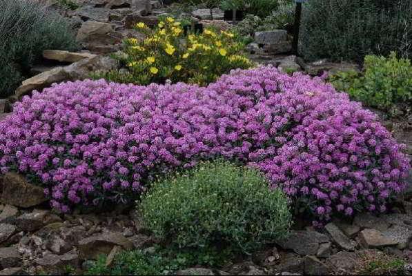 какие цветы сажать в марте на рассаду в 2018