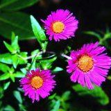 Цветы комнатные цветущие фото и названия