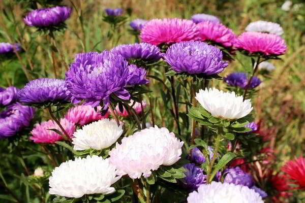 какие цветы сажать на рассаду в марте в средней полосе