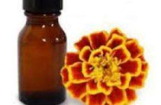 Бархатцы: полезные и лечебные свойства, противопоказания