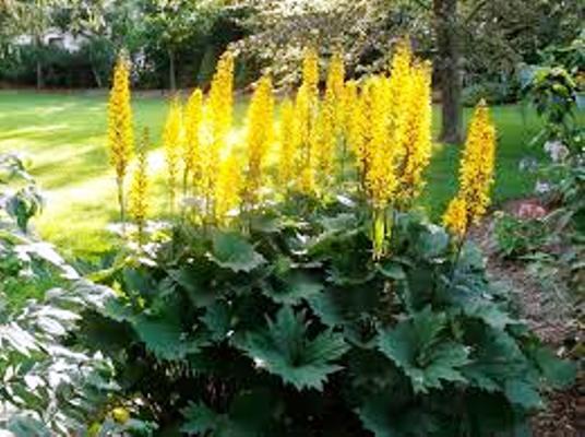 многолетние низкорослые цветы неприхотливые