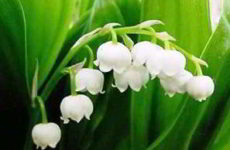 Весенние цветы: фото (25 шт) и названия растений для сада, клумбы, букета