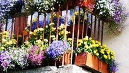 Как озеленить открытый балкон, подбор цветов, размещение, посадка